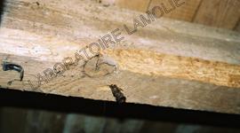 laboratoire lamolie traitements termites d ratisation d sinfection d sinsectisation bordeaux. Black Bedroom Furniture Sets. Home Design Ideas